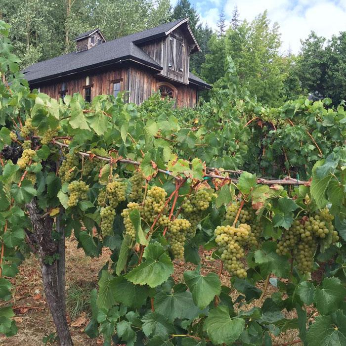 K & M Wines Carlton, Oregon